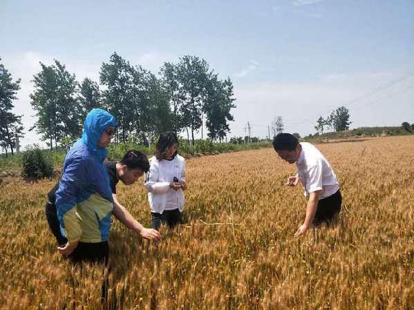 河南中华财险为粮食安全保驾护航_保险超市_互联网保险
