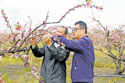 为黄桃种植添保障   推进农业保险多层次发展